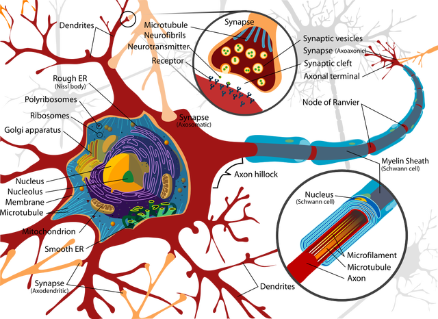 Neuron - Factscoops