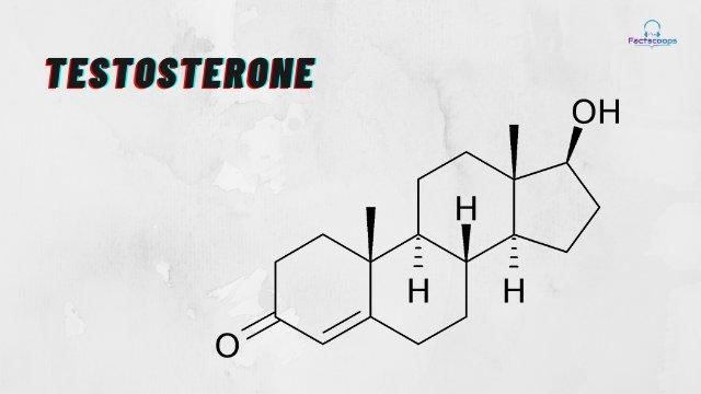 Testosterone Paradox